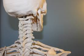 Anatomy And Physiology Skeletal System Test Anatomy And Physiology Archives All About Human Body