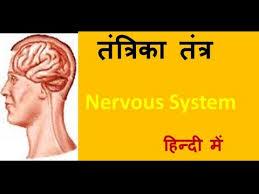 human nervous system in hindi urdu ह द for children youtube
