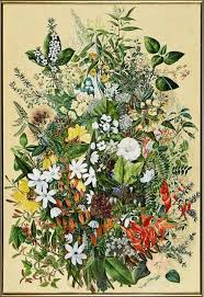 plants native to new zealand 214 best vintage u0026 botanical new zealand images on pinterest new