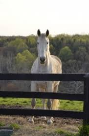 Signs Of Blindness In Horses Managing The Changing Needs Of Older Horses The Horse Owner U0027s