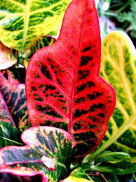 Tropical Plant Diseases - 46 best non poisonous houseplants safe for kids and pets images