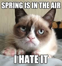 Grumpy Cat Snow Meme - 16 funny memes about spring