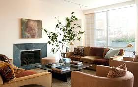 surprising plants for living room indoor money plant u2013 ei clinic com