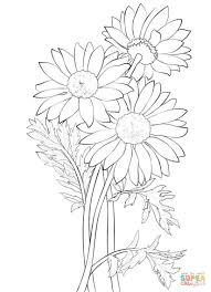 coloring page good looking daisy coloring page gerber daisy