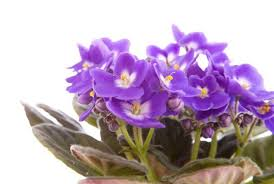 easy flowers to grow indoors 10 indoor blooms to brighten your home this winter porch advice
