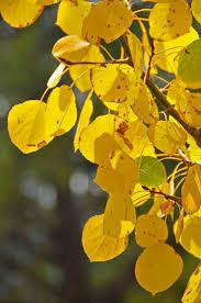 spirit halloween colorado springs 25 best fall in colorado springs images on pinterest