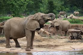 dallas zoo u2013 where do i take the kids