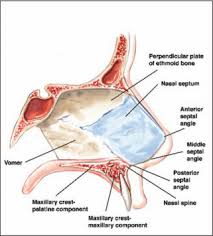 Nose Anatomy And Physiology Surgical Treatment Of Nasal Obstruction In Rhinoplasty
