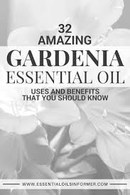 131 best gardenia images on pinterest gardenias jasmine and
