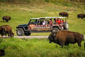 South Dakota wildlife tours images Buffalo safari jeep rides rapid city sd jpg