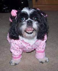 Small Dog Halloween Costumes Ideas Homemade Dog Costume Ideas