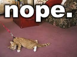 Nope Meme - nope cat memes and comics