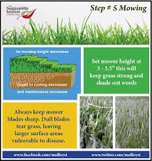 molloy college step 5 mowing your lawn