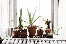 Window Sill Inspiration Lovable Window Sill Plants Inspiration With Hedera Helix Design
