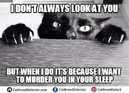 Evil Cat Meme - funny cute angry grumpy cats memes에 관한 114개의 최상의 pinterest