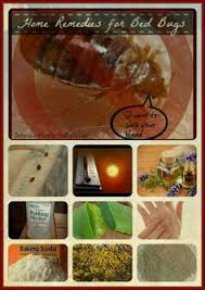 Bed Bug Home Remedies How To Get Rid Of Bed Bugs Forever 15 Natural Ways