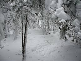 select seven cross country ski loops near lake placid lake