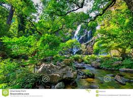 beautiful tropical rainforest and stream in deep forest stock