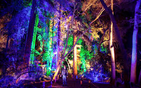 Enchanted Forest Of Light Descanso Gardens