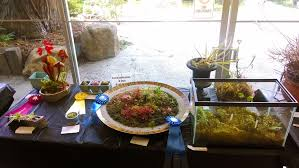 terrarium table bacps 2014 annual show and sale part two everything else sundews