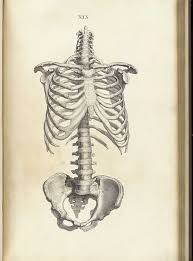 best 25 skeleton drawings ideas on pinterest skeleton skeleton