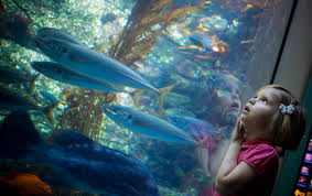visit birch aquarium at scripps