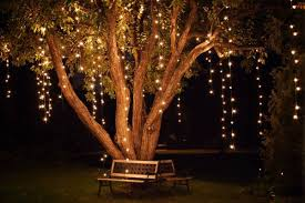 how to string lights on a tree vertical lights on a tree event lighting rental