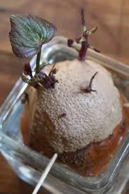 21 best grow u0026 assess boysenberry images on pinterest fruit