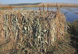 Duck Blind Accessories Your Duck Blind Doesn U0027t Have To Be Fancy To Be Effective Dove