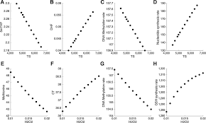 competition between dna methylation nucleotide synthesis and