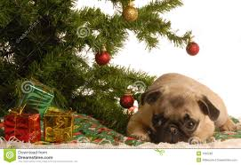 pug puppy tree stock photography image 7092282