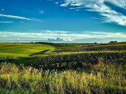 Iowa landscapes images Free photo grain farm country rural corn crop fields iowa max pixel jpg