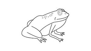 imagenes de un sapo para dibujar faciles 3 formas de dibujar una rana wikihow