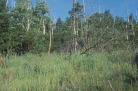 North Carolina vegetaion images Restoration of buck creek serpentine barrens jpg
