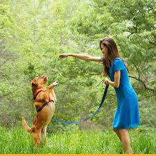 what is the best pet for a small space petspot