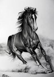 best 25 animal pencil drawings ideas on pinterest pencil