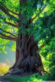 beautiful tree hd desktop wallpaper high definition fullscreen