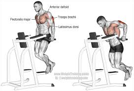 triceps dip exercise instructions and video weight training guide