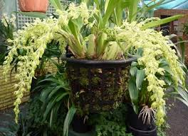 orchid plants for sale orchid society home