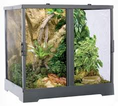 plant terrarium guide create a beautiful indoor garden