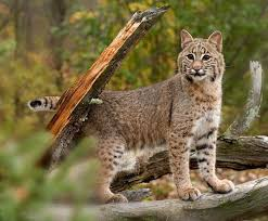 Arkansas Wildlife images Arkansas wildlife arkansas life pinterest arkansas wildlife jpg