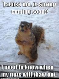 Groundhog Meme - the groundhog he lied to us all lying liar liar face imgur