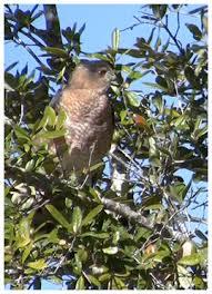 Audubon Backyard Bird Count by Great Backyard Bird Count Feb 12 15 2016 Welcome To Walton