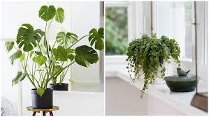 indoor plants that don t need sunlight 4 plants that don t need sunlight rl