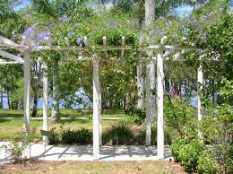 pergola with vines google search pergola trellis ideas