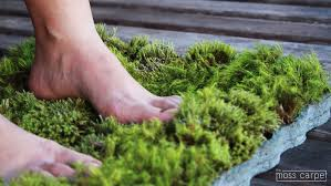 moss inhabitat green design innovation architecture green