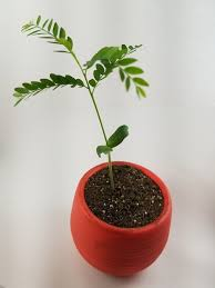 workspaces what are some good plants to grow on your desk quora