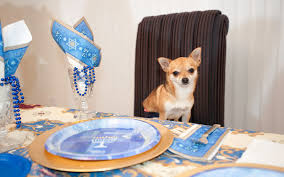 chanukah gifts 8 gifts for your pet this chanukah