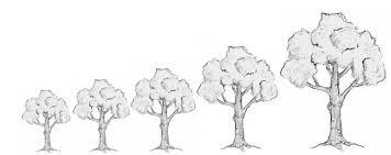 tips on buying fruit trees