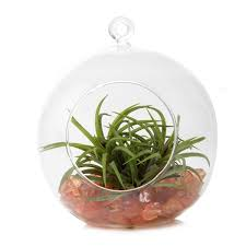 hanging terrarium chive products llc